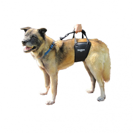 The Tall Male GingerLead is designed for shorter handlers, or tall, lean dogs (male or female) typically over 32kg.