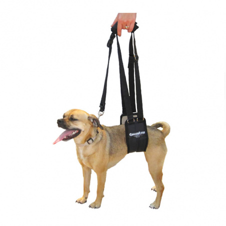 The Small Female GingerLead is designed for smaller, female dogs typically between 7 to 20kg.