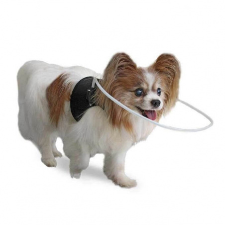 Walkin' Halo for Visually Impaired dogs