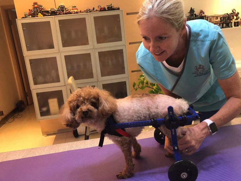 Pet Mobility Support and Carts