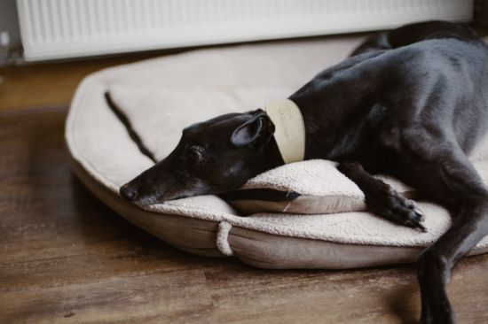A bed too small will leave your pet's limbs hanging