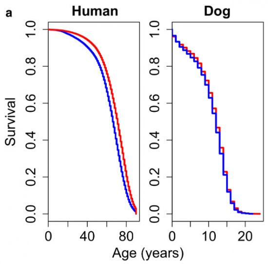 Human data are from the U.S. Census Bureau (1972–2002), and canine data come from the VetCompass database (2010–2013). For both species, colours represent the two sexes, female (red) and male (blue).