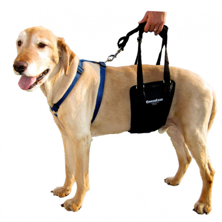 The Medium/Large Unisex GingerLead is designed for medium to giant breed dogs (male or female) typically over 20kgs.