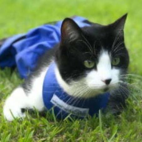 cat in drag bag