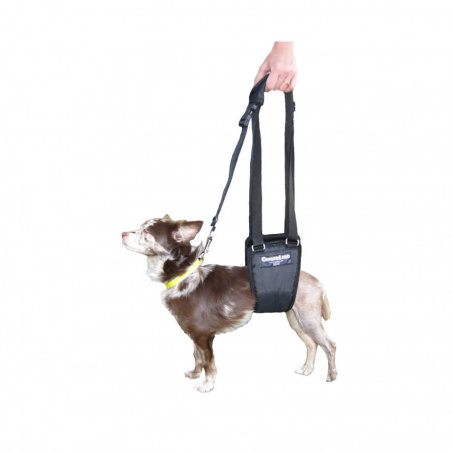 The Small Male GingerLead is designed for smaller dogs (male or female) typically between 7 to 20kg.